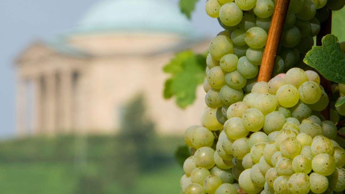 Weinkenner und Freunde haben eine besondere Vorliebe für Rebstöcke,auch im Urlaub. Hier haben wir die schönsten Weinanbaugebiete der Welt für Sie zusammengestellt.