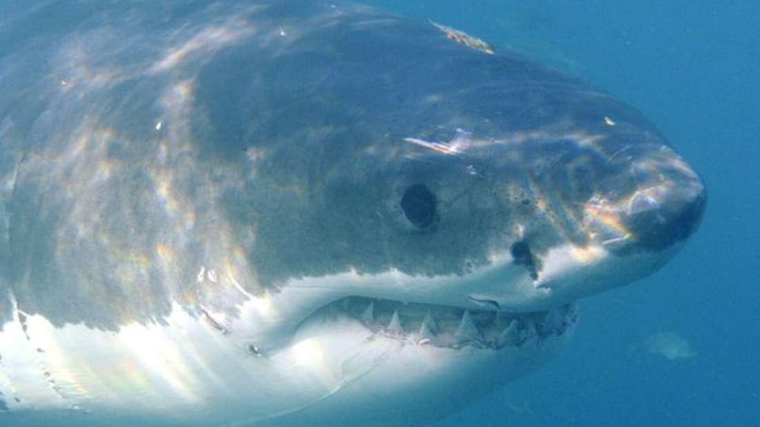 In einem 4-Sterne-Hotel in Las Vegas schwamm eines Tages ein Hai im Pool. Wie er dahin gekommen ist, konnten sich niemand erklären.