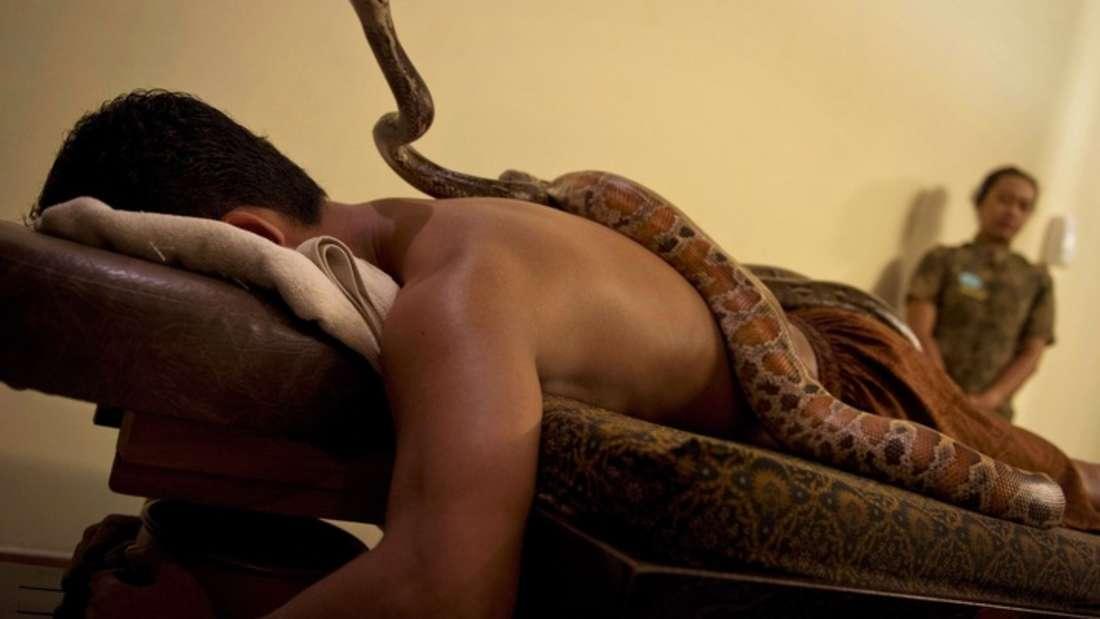 Statt sanfter Hände massieren Pythons den Körper.