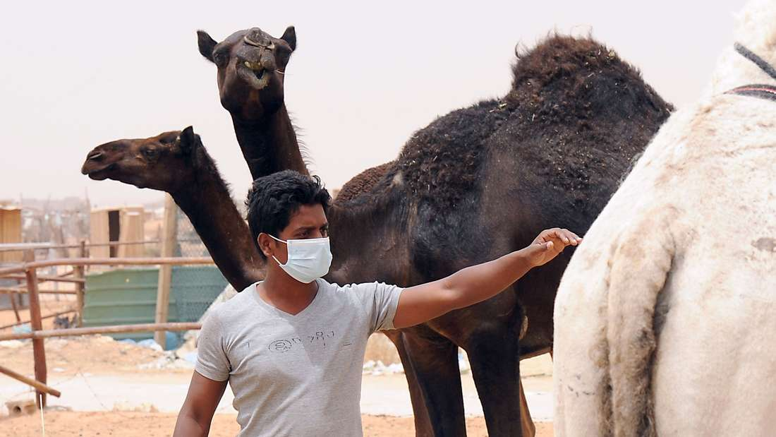 Besser nicht mit Kamelen in Kontakt kommen.