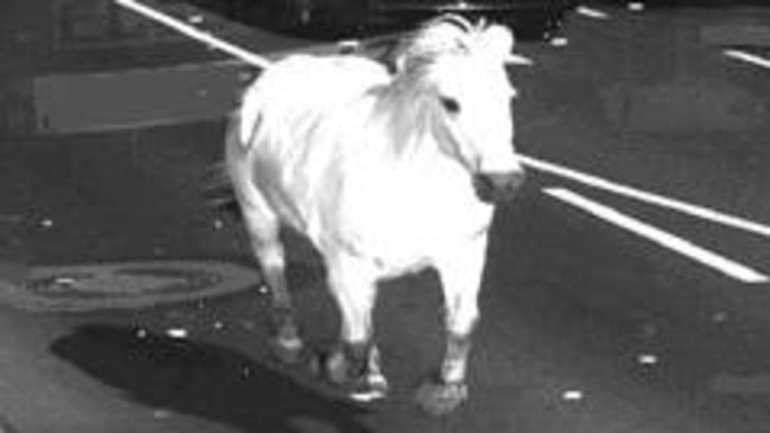 Das Radarfoto, herausgegeben vom Landkreis Emsland, zeigt ein weißes Pferd auf dem Schullendamm in Meppen.