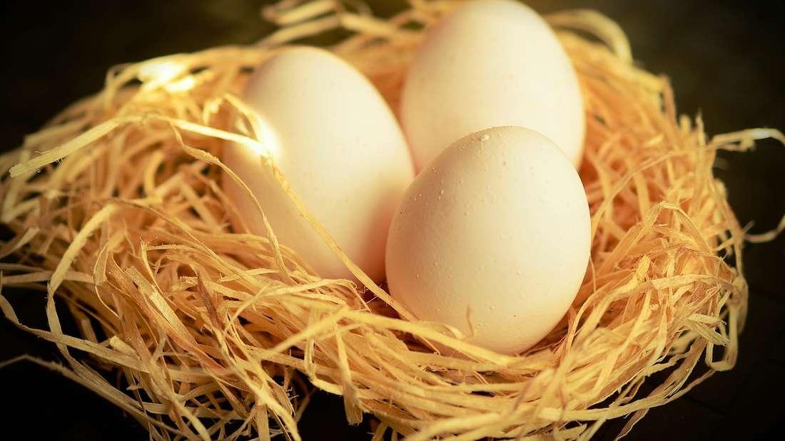 Bitte umdrehen: Eier werden im Eierfach des Kühlschranks aufbewahrt – und zwar mit der Spitze nach unten. So halten sie sich länger, denn auf diese Weise ist die Luftkammer oben. Andersherum kann die Luftblase aufsteigen, die Eihaut sich ablösen und Keime eindringen.