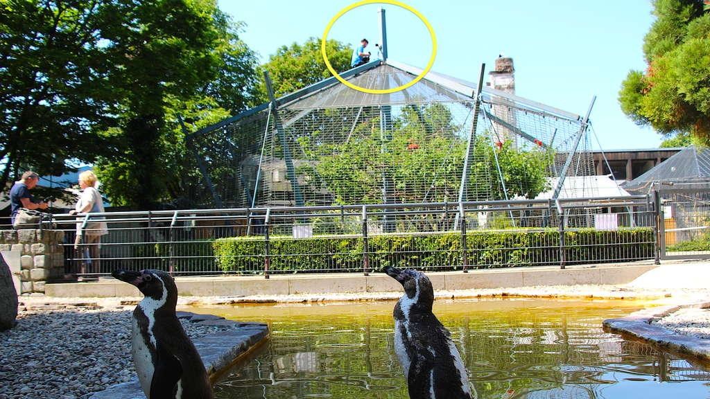 Pinguin Mannheim