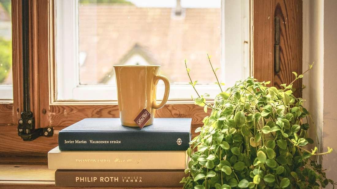 Auch wenn Sie manchmal Arbeit machen: Zimmerpflanzen sorgen für Leben in Ihren vier Wänden. Bei Kunstpflanzen können Sie sich außerdem das Gießen sparen. Doch auch die sollten hin und wieder abgestaubt werden.