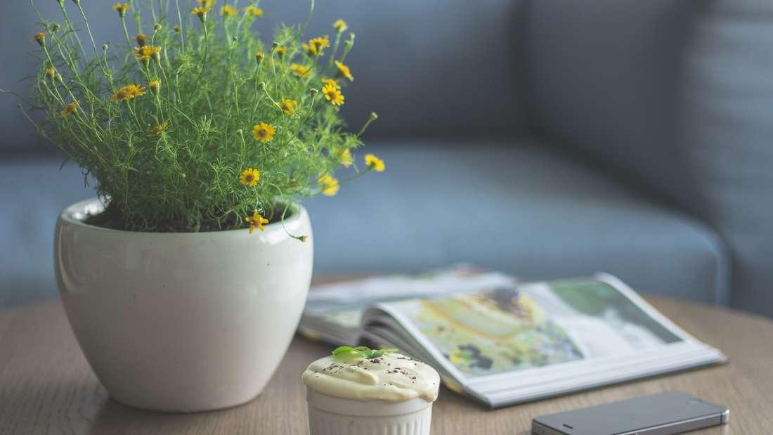 Auch deutsche Blumentöpfe sind nicht sicher. Zwischen Vase und Topf verschwinden meist einige Geldscheine.