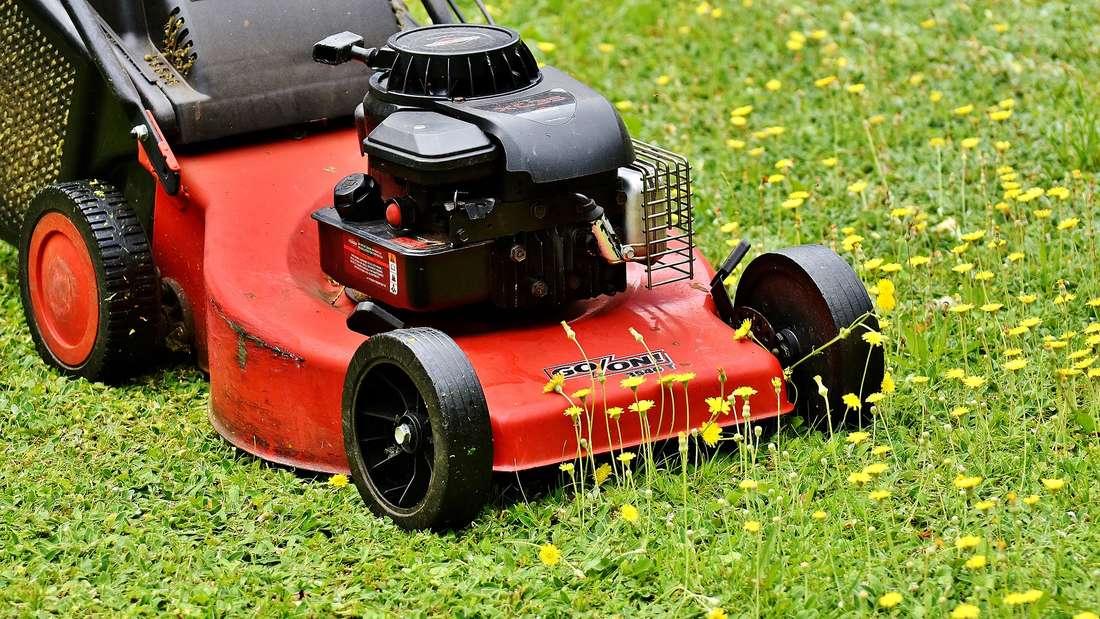 Nicht nur Autos, sondern auch Rasenmäher sind manchmal richtige Luftverpester. Eine Studie in Schweden stellte fest, dass ein mit Benzin betriebener Rasenmäher genauso viel Abgase stündlich in die Umwelt freisetzt, wie ein Auto, dass 100 Meilen (rund 161 Kilometer) fährt.