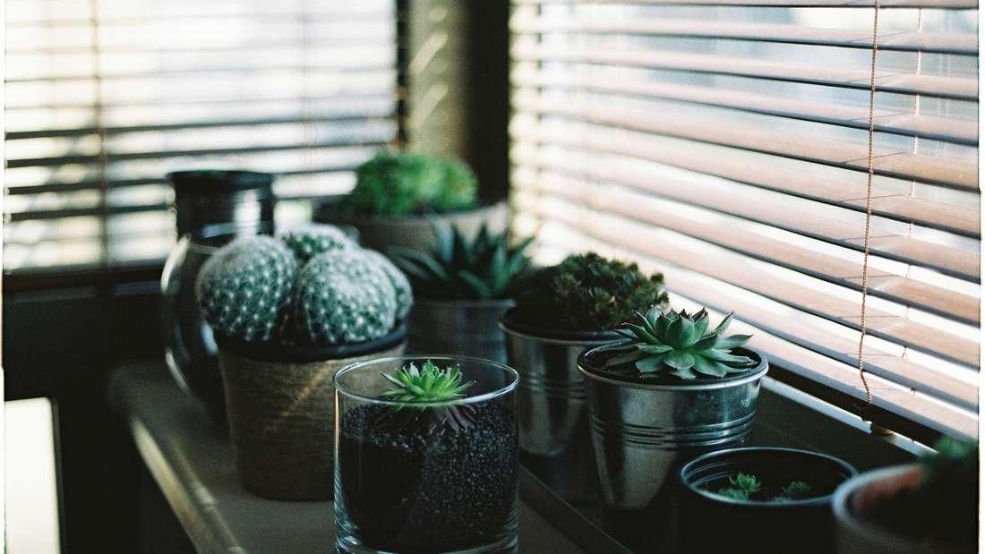 Sie verleihen dem Raum Leben - aber nur wenn sie schön grün sind und nicht von Staub bedeckt. Legen Sie auch hier regelmäßig Hand an.