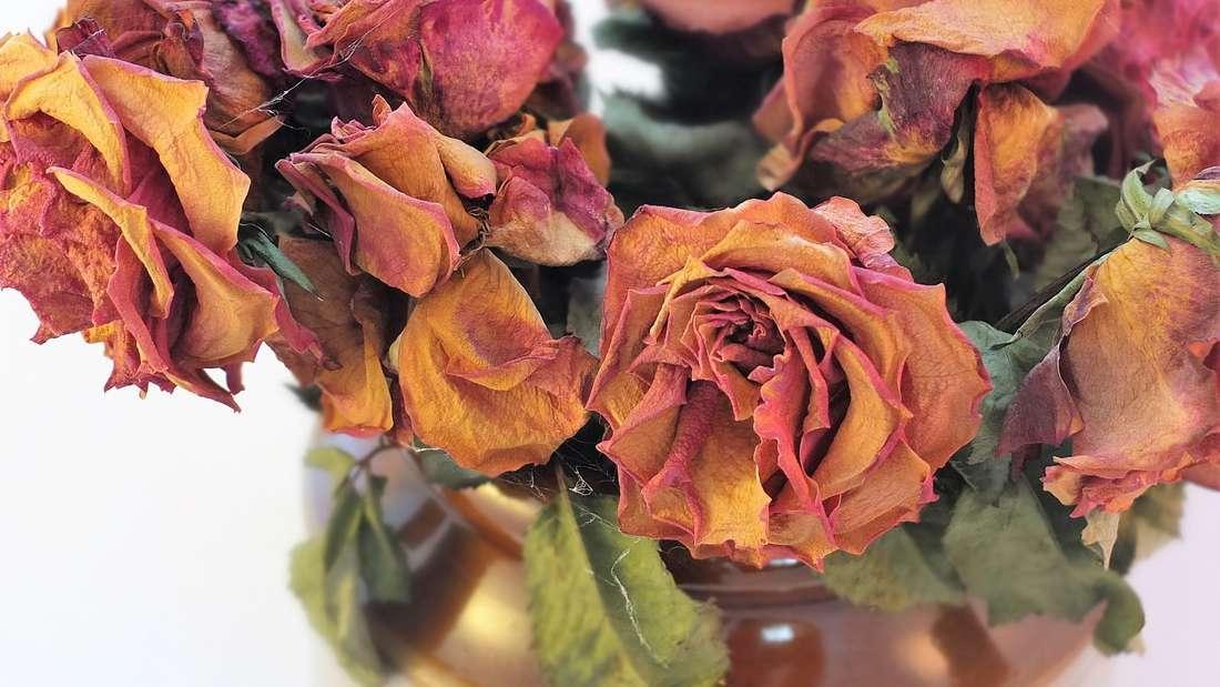 Blumen an sich werten die Wohnung hervorragend auf und beleben die Umgebung. Sind die Pflanzen allerdings verwelkt, drücken Sie eher auf die Stimmung - selbst, wenn Sie das nicht unmittelbar bemerken.