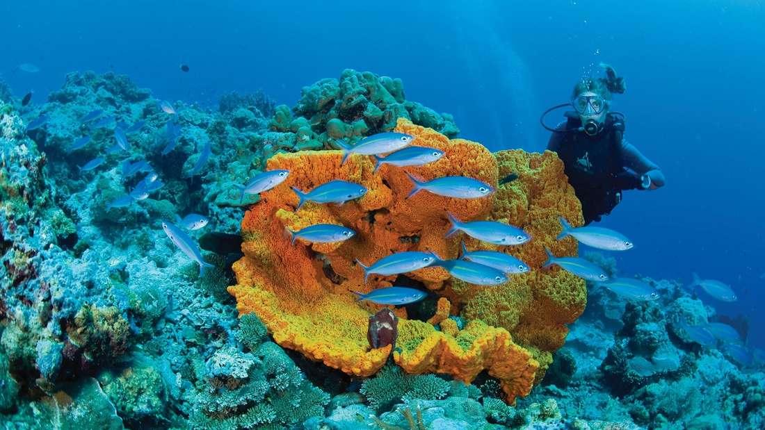 Abwechslungsreiche Unterwasserlandschaft in Papua - Neuguinea