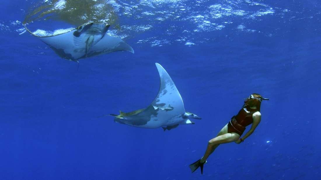 Rochen, Schwertfische und Mantas auf den Azoren