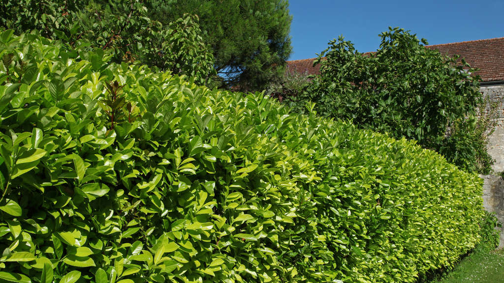 Gesetze Für Heimwerker Das Ist Zu Beachten Bei Hecken Gartenhaus
