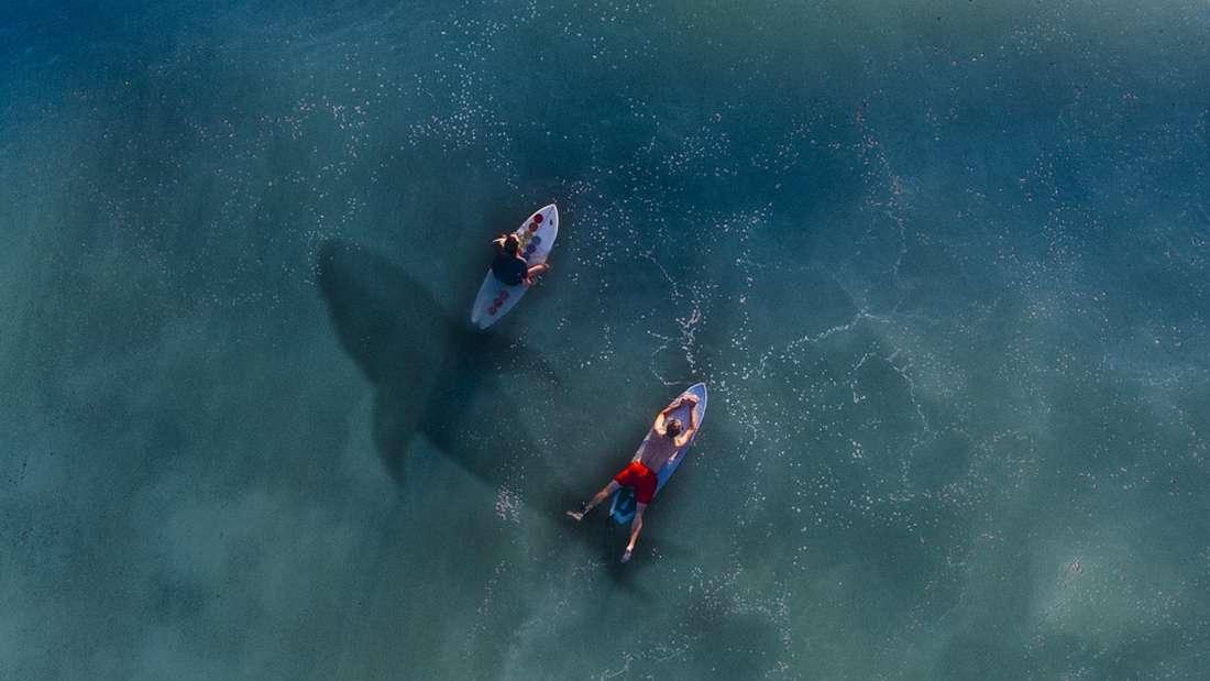 Hai-Angriffe sind selten - und finden meist an den gleichen Küsten statt.