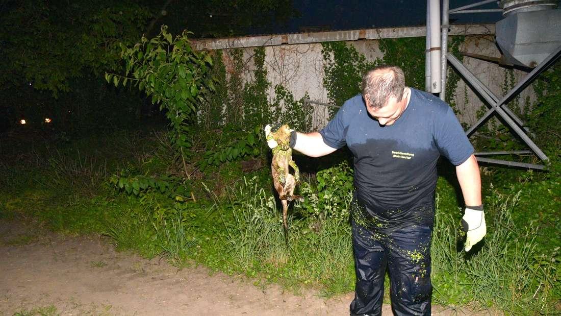Fuchsjunges in Plankstadt gerettet