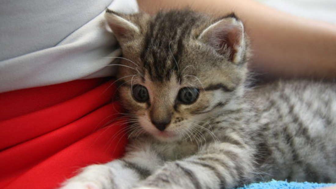 So süß Ihr Kätzchen oder der Welpe Sie auch ansieht - im Bett sollten Sie Haustiere trotzdem nicht schlafen lassen. Schließlich verlieren sie viele Haare und können sogar Parasiten oder bakterielle Erkrankungen übertragen.