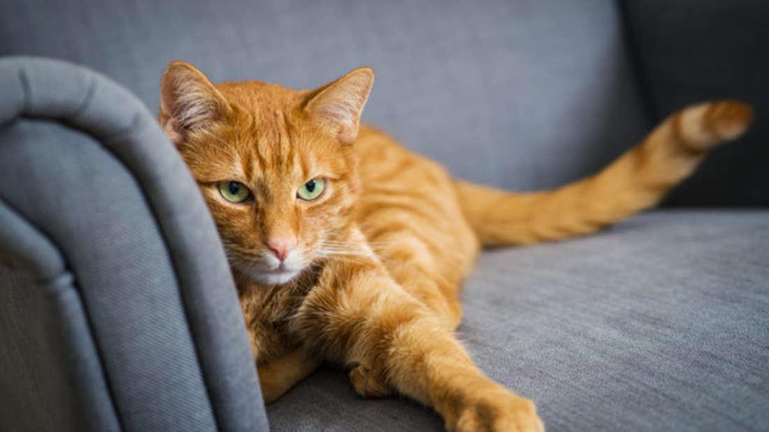 Katzen auf Sofa - das geht nicht immer gut aus. Manche Stoffe sind jedoch robuster.