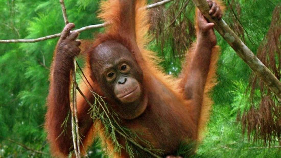 Affenwald Ubud/Sacred Monkey Forest Sanctuary (Symbolbild)