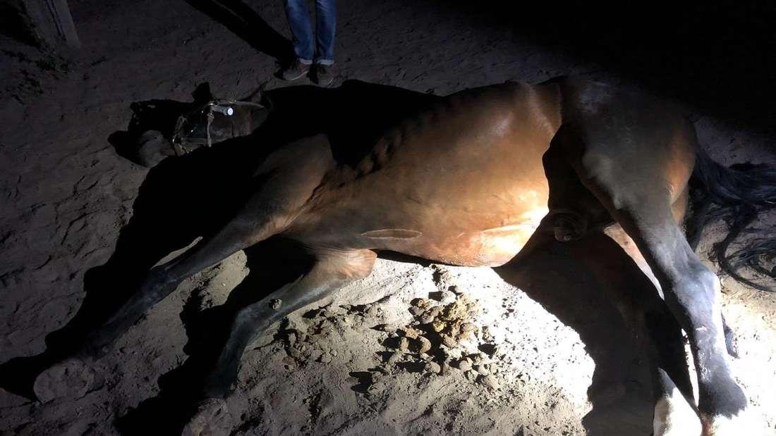 Pferde sind Misshandlung und Verwahrlosung ausgesetzt