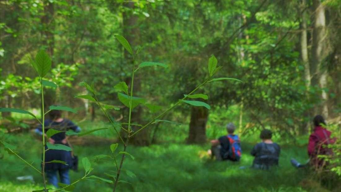 Annette Bernjus leitet Achtsamkeitsübungen an, wenn sie mit den Teilnehmern ihrer Kurse so wie hier im Wald unterwegs ist. Foto: Manfred Bernjus/embe-Foto