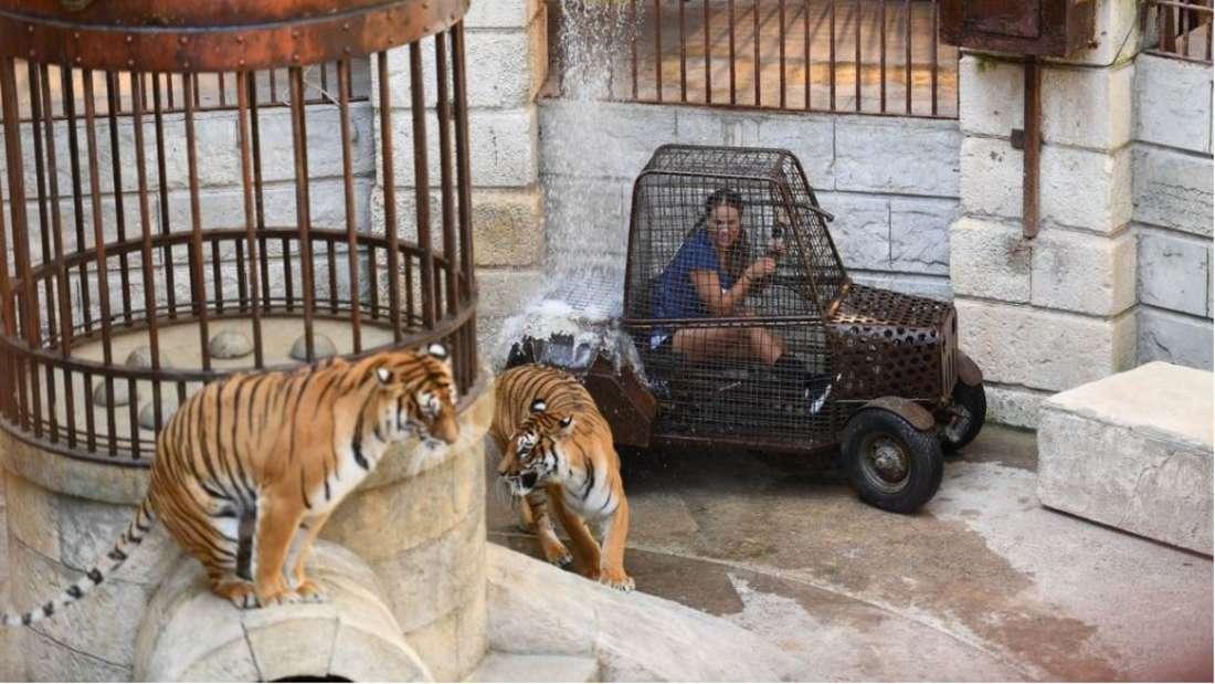Im Tiger-Käfig musste sich Jessica Paszka zwei Angriffslustigen Tigern stellen und erlitt eine Panik-Attacke.