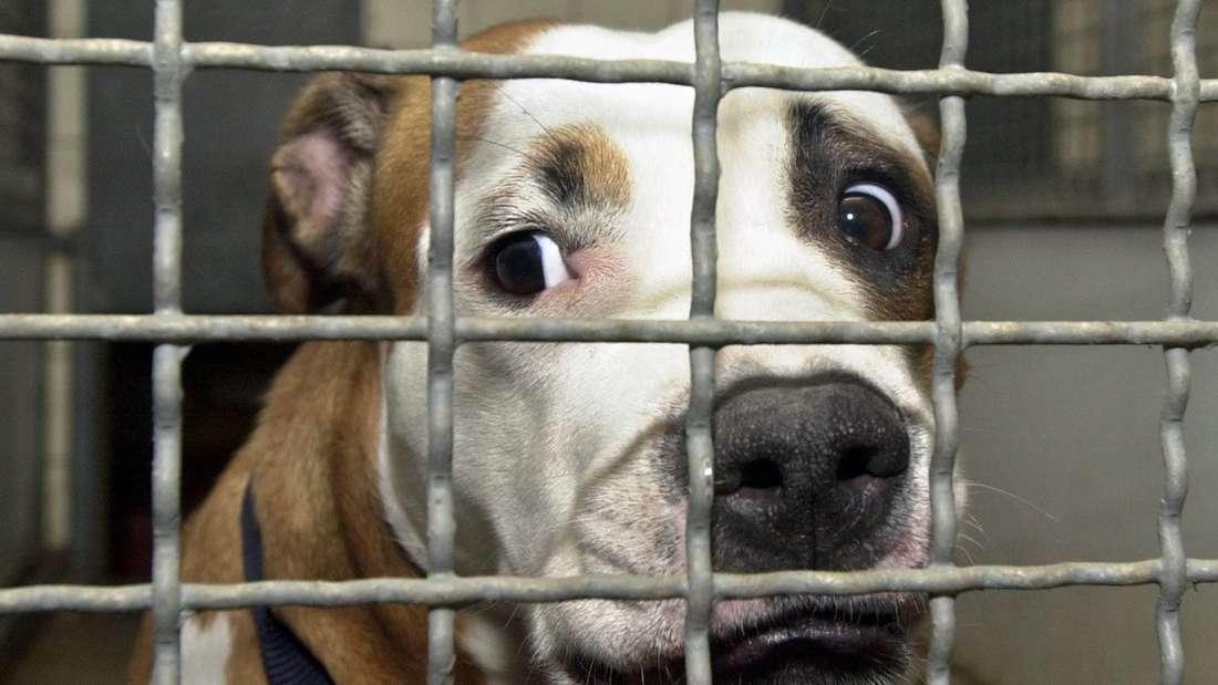 Hunde aus schrecklichen Zuhause gerettet (Symbolfoto)