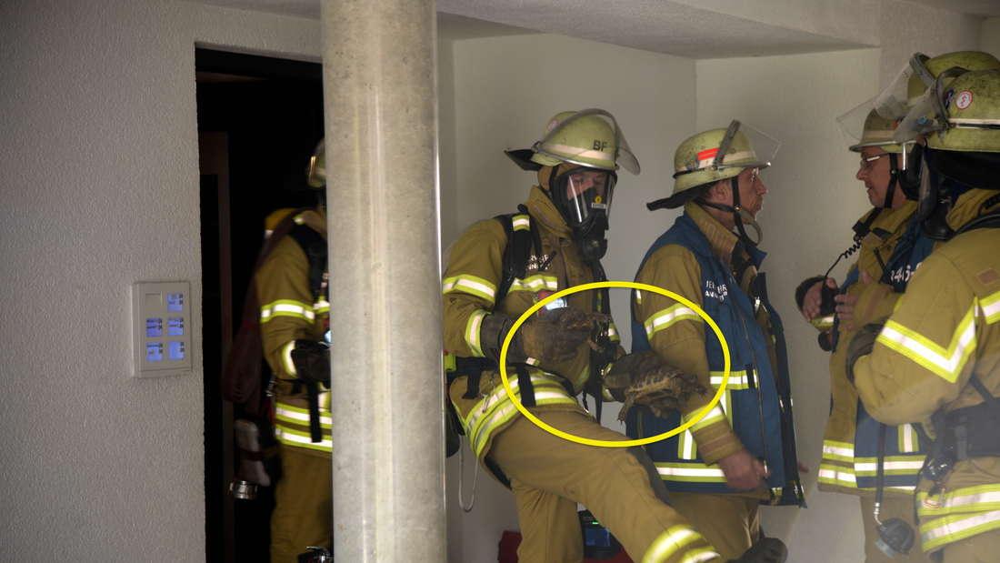 Feuerwehr rettet Schildkröten aus brennendem Terrarium