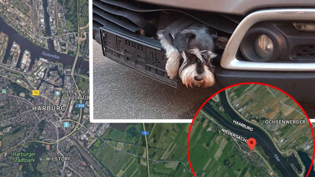 Hamburg: Ein Hund steckt nach einem Unfall im Kühlergrill von einem Auto fest - und überlebt!