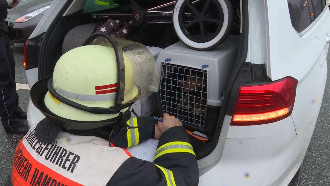 In Hamburg ist ein VW Passat in einen Ferrari gekracht. Bei dem Unfall wurden drei Personen verletzt, im Auto befanden sich auch ein Baby und ein Hund.