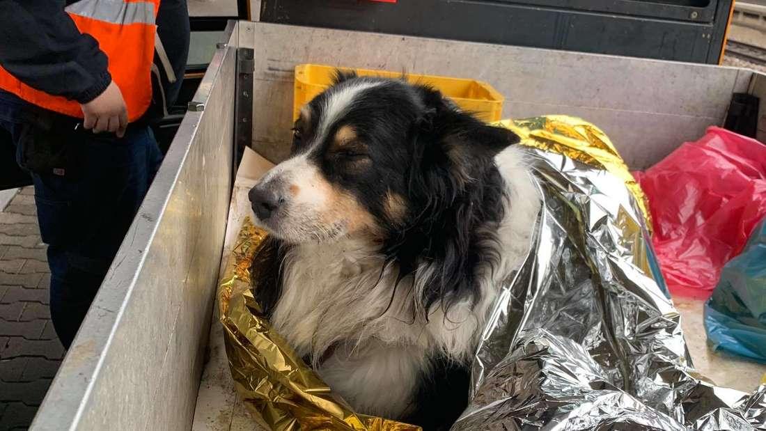 Wegen einer Herzerkrankung bricht ein Hund am Bahnsteig zusammen.