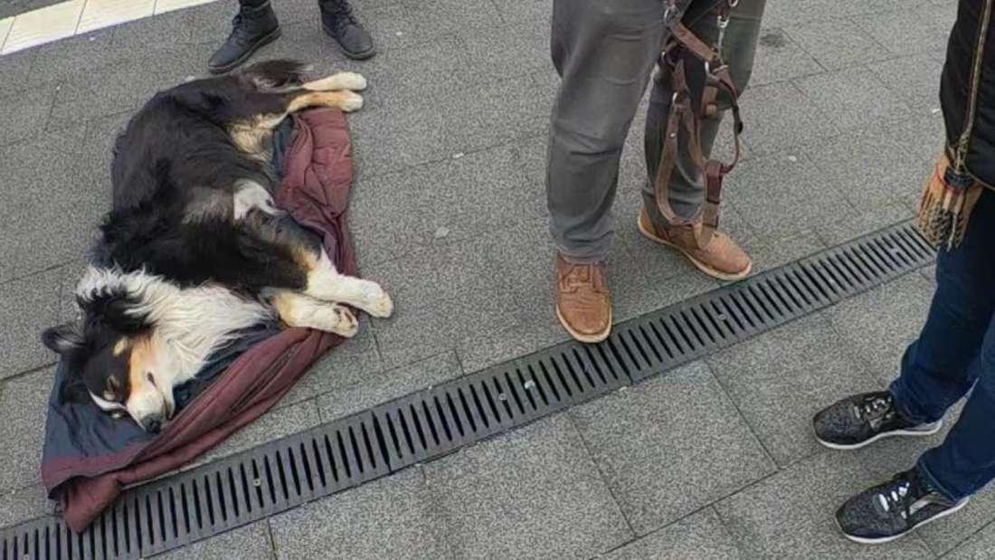 Der völlig geschwächte Hund am Bahngleis in Ladenburg