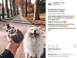 Mannheim Instagram Igel Mr Pokee Ist Tot Süße Fotos Vom