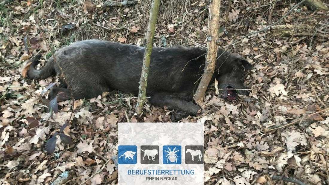 Toter Hund Lampenhain © Berufstierrettung Rhein-Neckar