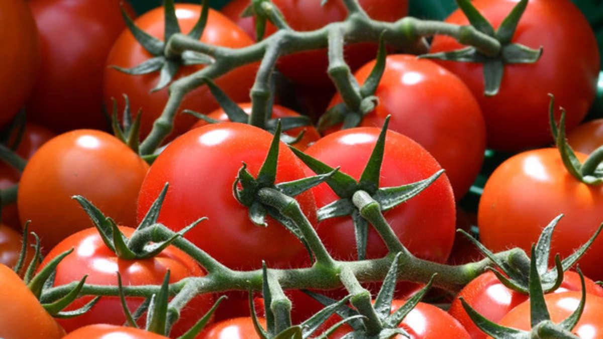 tomaten pflanzen alles was sie zu zeitpunkt und standort beachten m ssen bauen wohnen. Black Bedroom Furniture Sets. Home Design Ideas