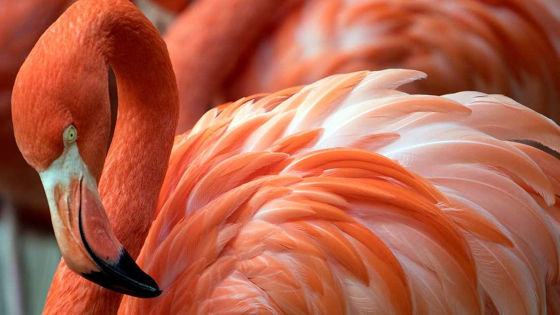 Ein Flamingo am Flughafen sorgte für Aufregung auf Mallorca. (Symbolbild)