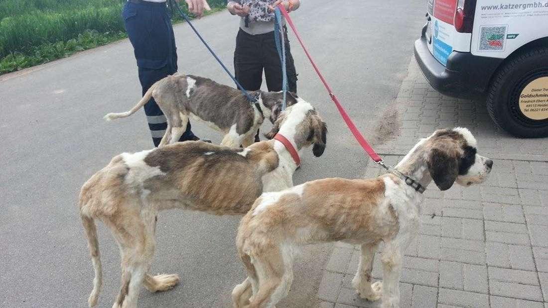Leider keine Seltenheit: Vernachlässigte Tiere, die die Retter aus schockierenden Zuständen befreien müssen.