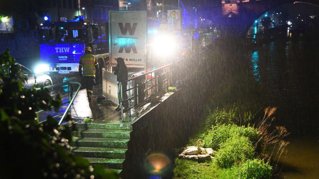 Rettung der Schwanen-Familie am Neckar vor Hochwasser