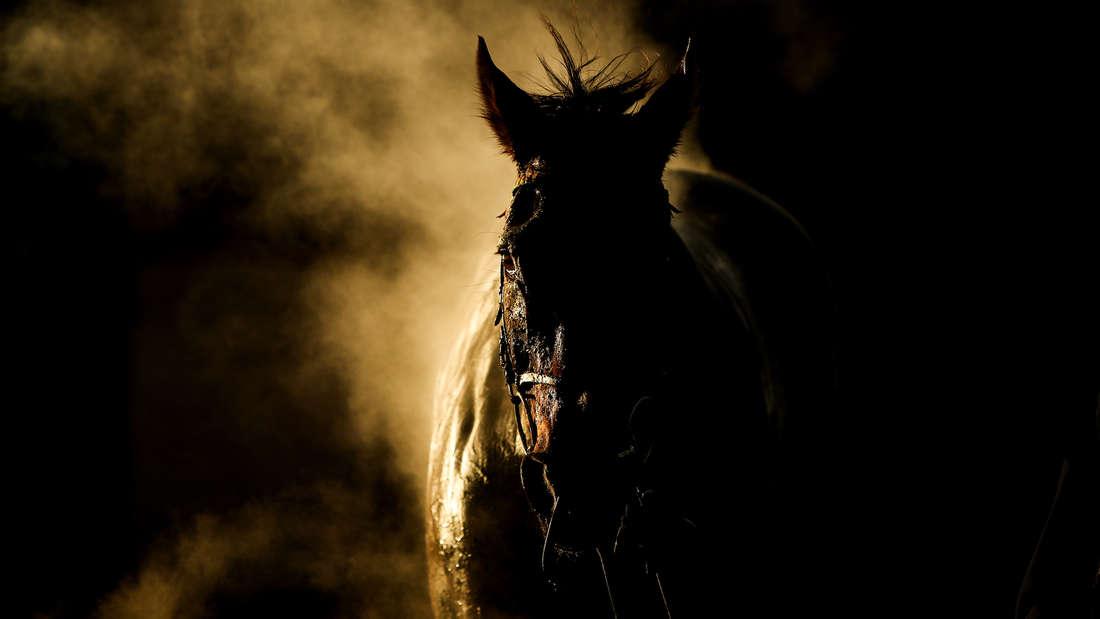 chock für Besitzerin: Verletzt ein Tierhasser ihr Pferd? (Symbolfoto)
