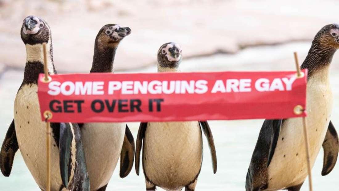 «Manche Pinguine sind schwul, komm darüber hinweg» - mit diesem Spruch will der Londoner Zoo über Homosexualität bei Tieren aufklären. Foto: ZSL London Zoo