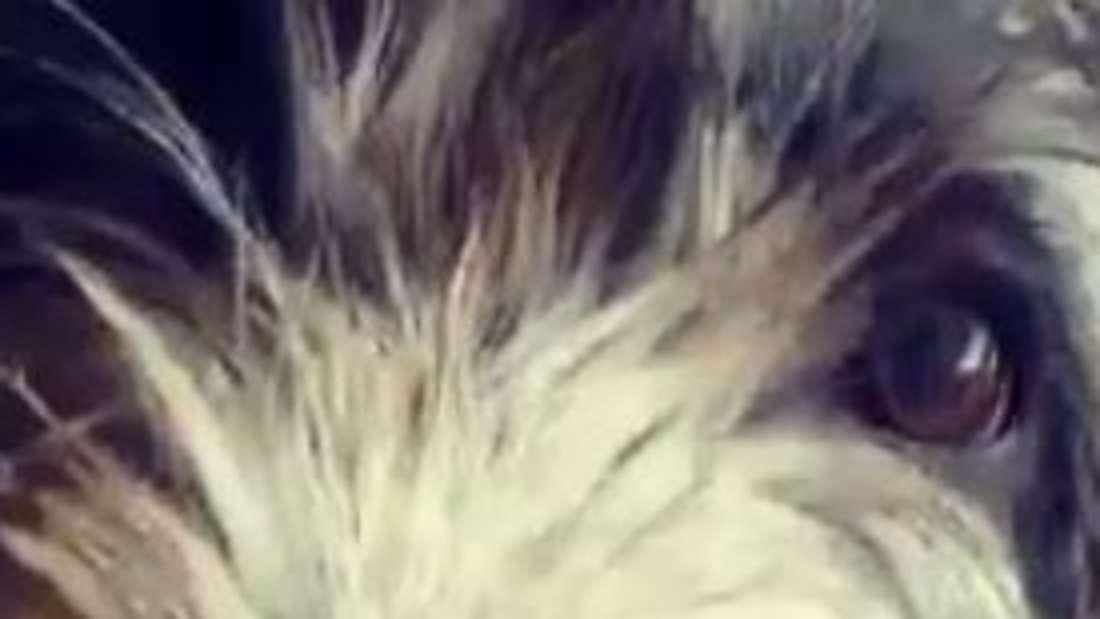 Hund Anton ist jetzt neun Monate alt.