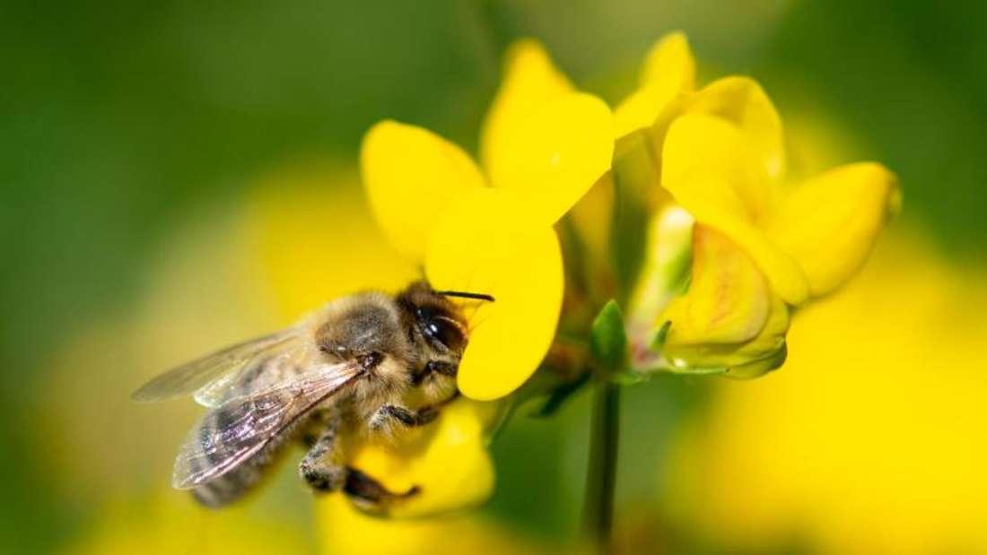 Auf Wiesen und in Wäldern Deutschlands sind inzwischen deutlich weniger Insekten unterwegs als noch vor einem Jahrzehnt. Foto: Fabian Sommer/dpa