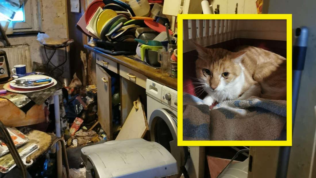 Katzen werden aus einer Messie-Hölle befreit.