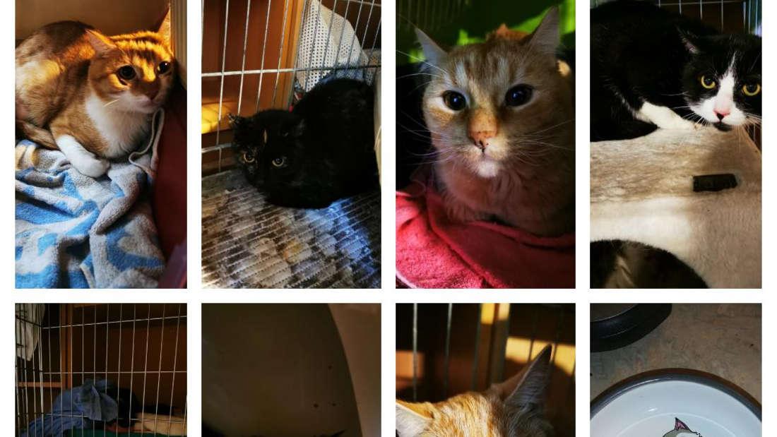 7 der 8 geretteten Katzen.