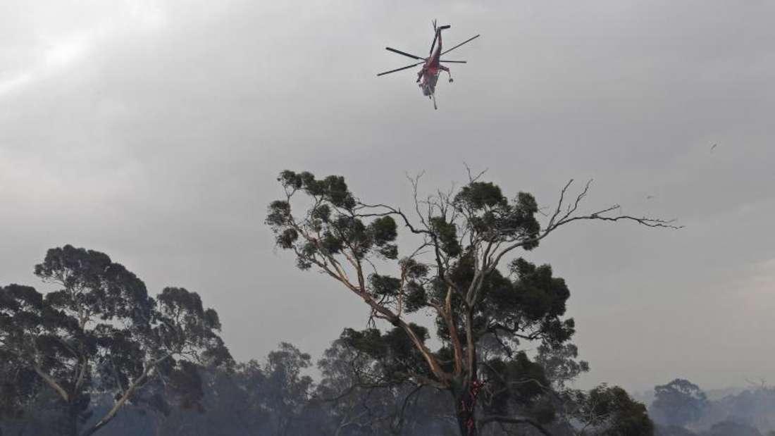 Ein Löschhubschrauber fliegt über Bäume vor rauchverhangenem Himmel im Vorort Bundoora von Melbourne. Foto: Julian Smith/AAP/dpa