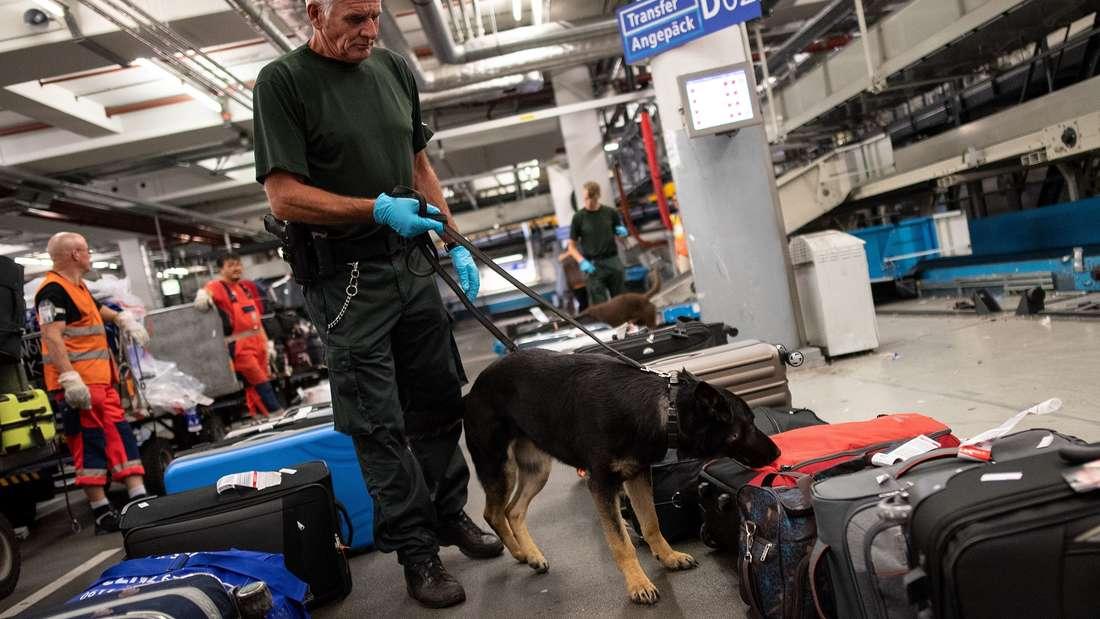 Ein Zollbeamter mit seinem Hund am Flughafen. (Symbolbild)