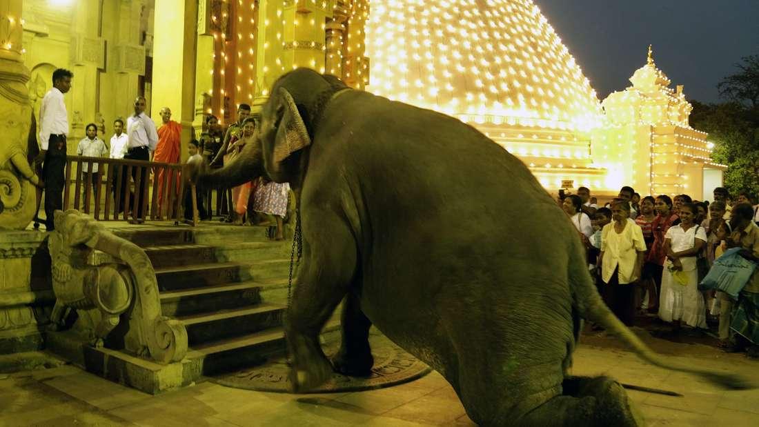 Ein Elefant in Sri Lanka.