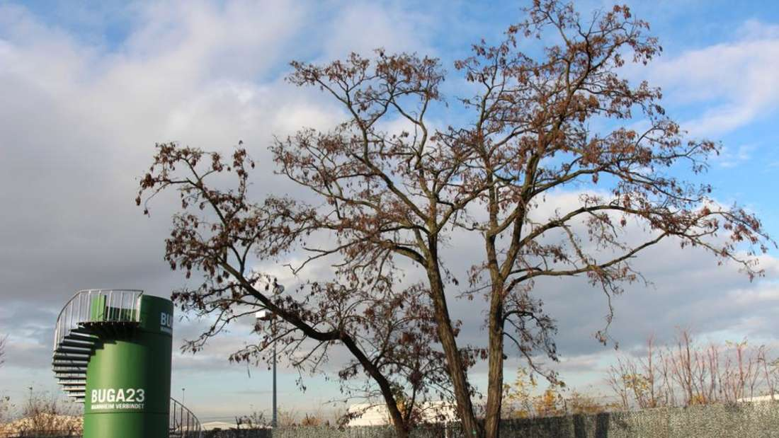 Ein Baum neben einem kleinen Turm mit der Aufschrift BuGa 2023