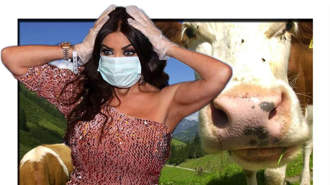 Fotomontage: Realitystar Kader Loth schlägt die Hände über dem Kopf zusammen, dahinter Kühe auf einer Alm