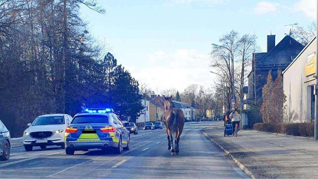 Nachdem sich das Pferd bei seiner Besitzerin losgerissen hat, rannte es mit hohem Tempo durch Darmstadt in Richtung Autobahn A5. (Symbolfoto)