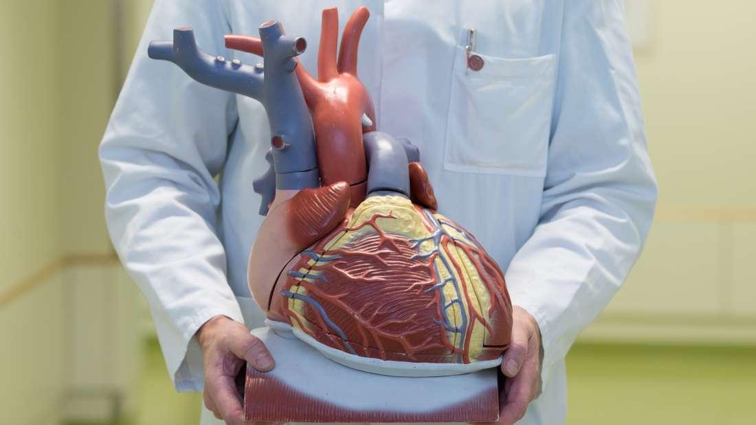 Ein Arzt hält das Plastikmodell eines Herzens in seinen Händen