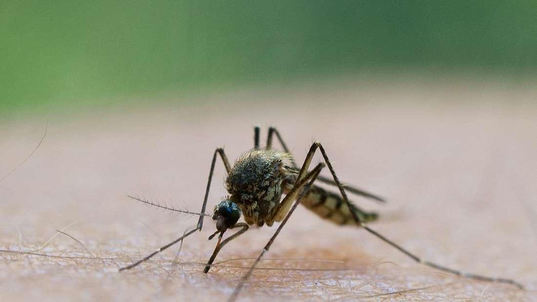 Mücke sitzt auf Arm