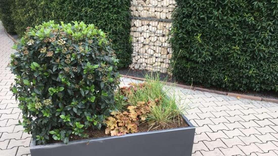 Pflanzkübel und Sitzgelegenheiten sollen die Mannheimer Innenstadt verschönern
